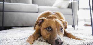 Razones para adoptar una mascota