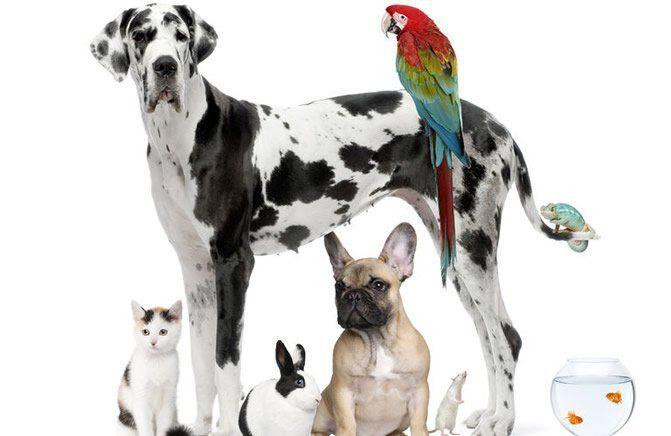 adopta la mejor mascota para ti