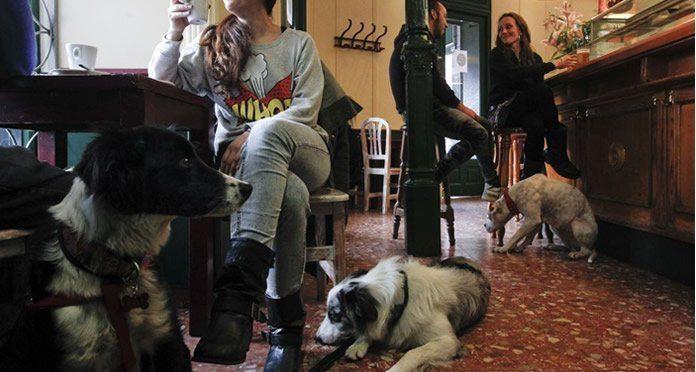 Sociabilizar con otros dueños de mascotas.