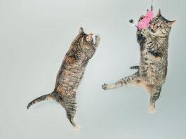 convivencia gatos
