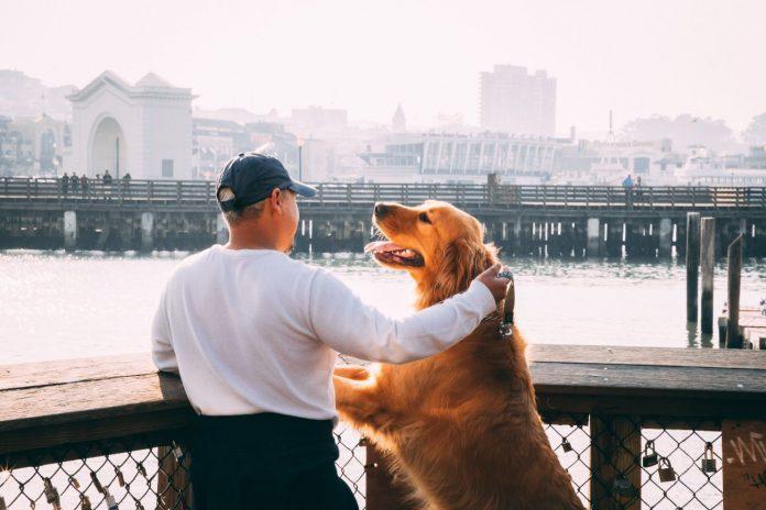 razones para tener perro