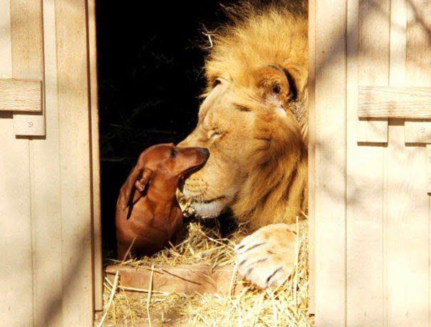 amistades con animales