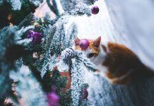 planta de navidad toxica para gatos