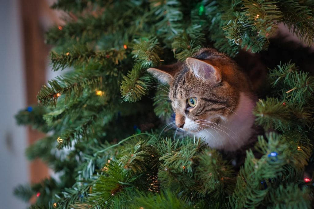 peliculas de navidad