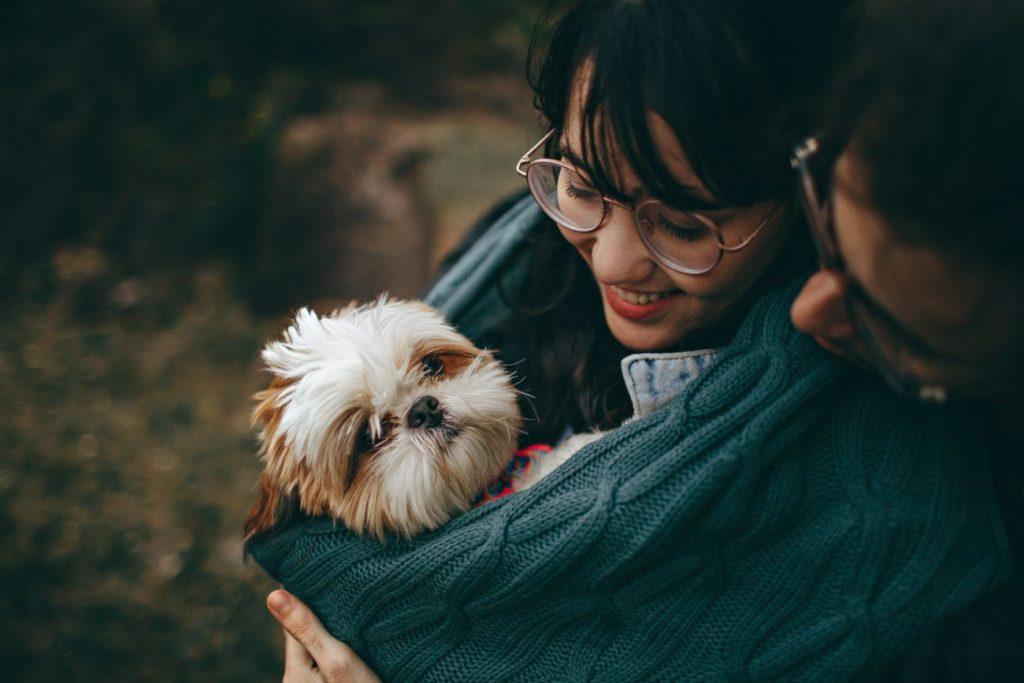 ayuda para educar a un perro
