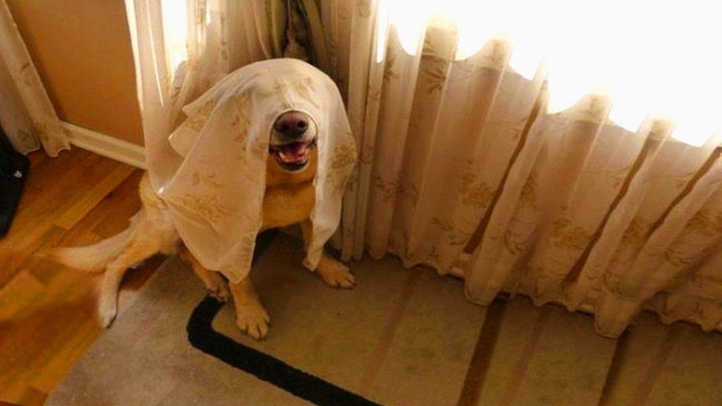 juegos olfativos para perros