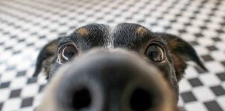 juego olfato para perro