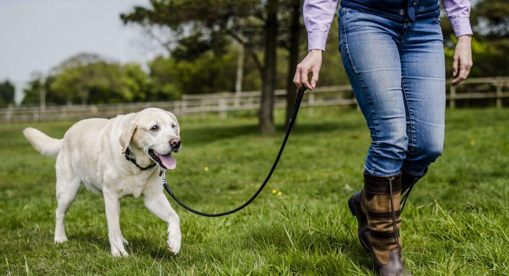 señal de calma en perros