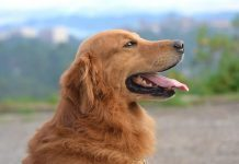señales calma perros