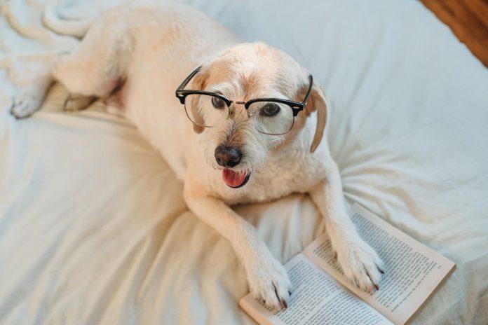 libros sobre perros