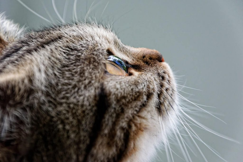 sintomas gato estresado