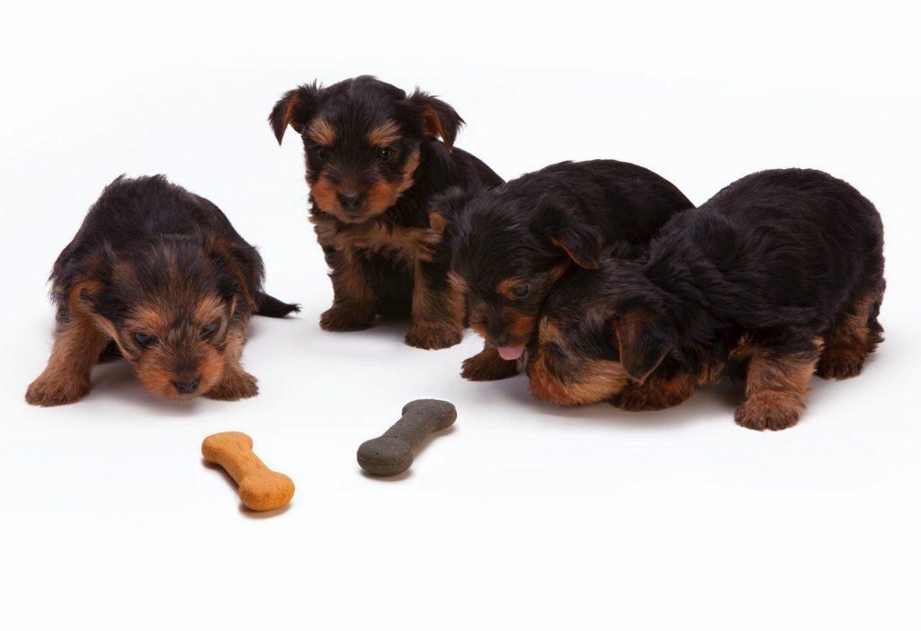 perros tomar vitaminas