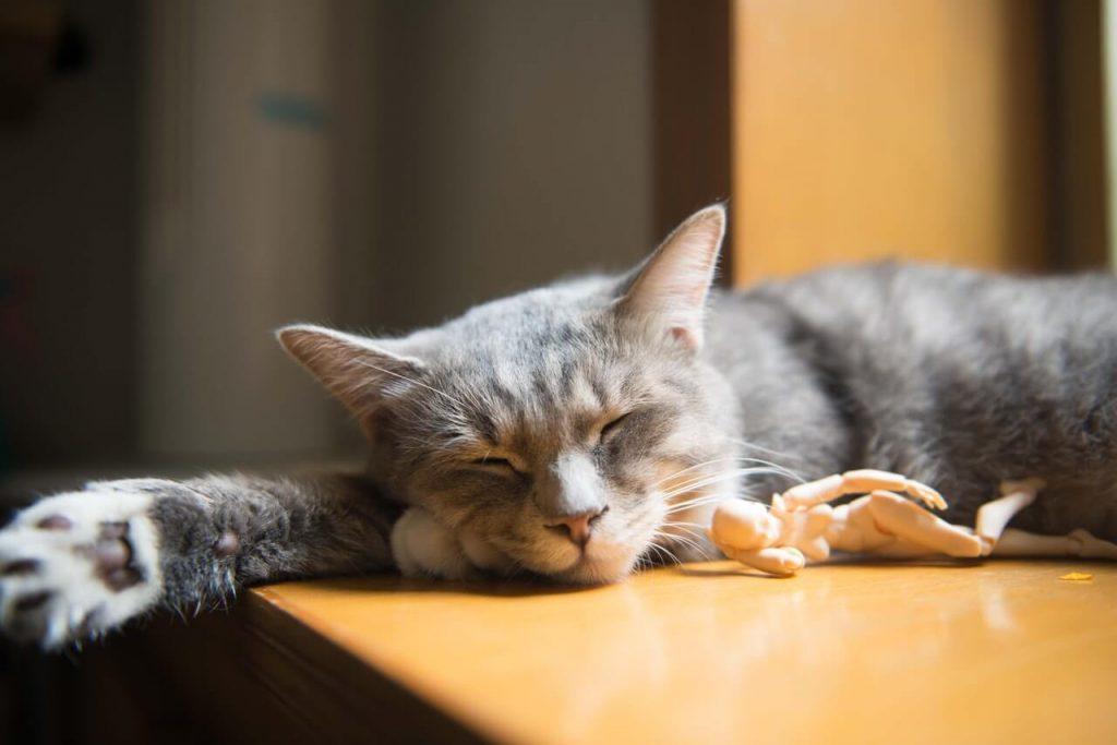 habitos para dormir bien