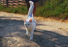 como sacar a pasear un gato