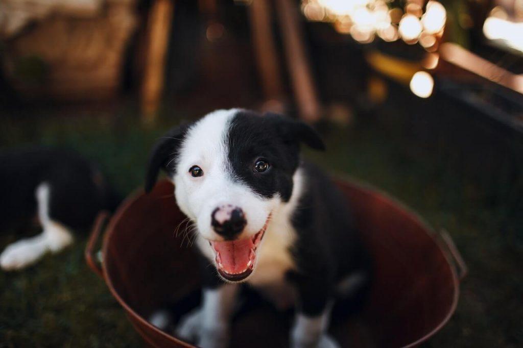 cada cuanto se baña un cachorro