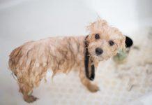 cada cuanto se baña un perro